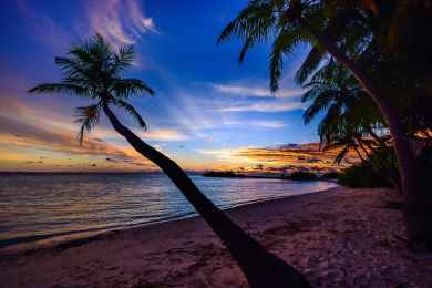 beach calm clouds coconut trees